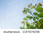 closeup view leaf green and... | Shutterstock . vector #1157674258