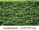 hedge of fir trees. natural... | Shutterstock . vector #1157757118
