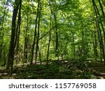 forest trees on sunny day | Shutterstock . vector #1157769058
