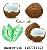 exotic tropical depicting whole ... | Shutterstock .eps vector #1157788825