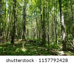 forest trees on sunny day  | Shutterstock . vector #1157792428