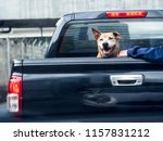 Dog On Black Pick Up Truck ...