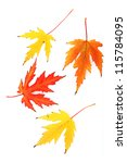autumn maple leaves  isolated... | Shutterstock . vector #115784095