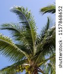 tropical palm trees on hot... | Shutterstock . vector #1157868652