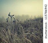 vintage nature background | Shutterstock . vector #115786942