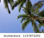 tropical palm trees on hot... | Shutterstock . vector #1157873392