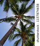 tropical palm trees on hot... | Shutterstock . vector #1157874658