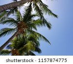 tropical palm trees on hot... | Shutterstock . vector #1157874775