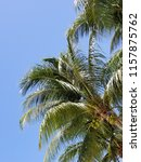 tropical palm trees on hot... | Shutterstock . vector #1157875762