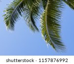tropical palm trees on hot... | Shutterstock . vector #1157876992