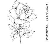 rose flower in a vector style... | Shutterstock .eps vector #1157983675