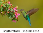 hummingbird with pink flower.... | Shutterstock . vector #1158011215