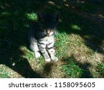 Stock photo kitten sitting in the grass looking at something close by a part of the kitten is in the shadow 1158095605