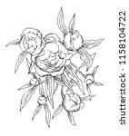 beautiful hand drawn bouquet of ... | Shutterstock . vector #1158104722