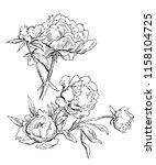beautiful hand drawn bouquet of ... | Shutterstock . vector #1158104725