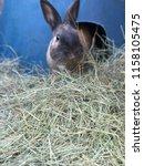 Rabbit Bunny On Grass With Blu...