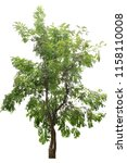 tree isolated on white... | Shutterstock . vector #1158110008