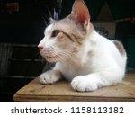 cat lying on a wooden board. | Shutterstock . vector #1158113182