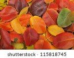Beautiful Fall Foliage In A...