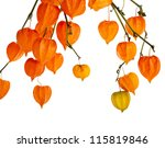 colorful autumn decoration... | Shutterstock . vector #115819846