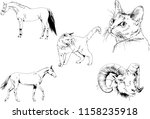 set of vector drawings of... | Shutterstock .eps vector #1158235918