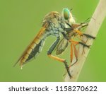 macro fauna insect | Shutterstock . vector #1158270622