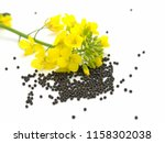 Rapeseed On White Background