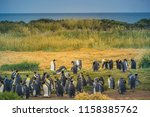 king penguins at tierra del... | Shutterstock . vector #1158385762