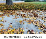 driveway and front yard of... | Shutterstock . vector #1158390298