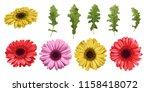 watercolor flower gerbera and... | Shutterstock .eps vector #1158418072