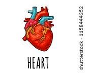 human anatomy heart. vector... | Shutterstock .eps vector #1158444352