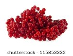 a cranberry is isolated on a... | Shutterstock . vector #115853332