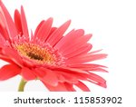 Red Flower Gerbera Isolated On...