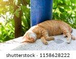 the orange ginger cat is... | Shutterstock . vector #1158628222