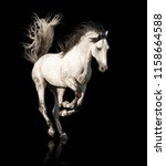 Stock photo white andalusian horse with black legs and mane galloping isolated on black background 1158664588