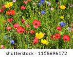 Summer Meadow With Lots Of...