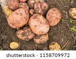 freshly harvested potato on the ... | Shutterstock . vector #1158709972