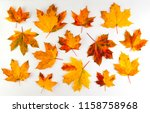 Colorful Autumn Leaves On White ...