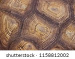 Stock photo cropped shot of turtle s shell pattern of nature cropped shot of giant turtle 1158812002
