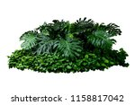 tropical green leaves  floral... | Shutterstock . vector #1158817042