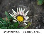 close up with flower | Shutterstock . vector #1158935788