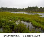Marsh  Forest  And Pond View O...