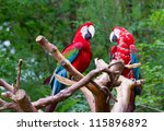 pair of parrot bird sitting on... | Shutterstock . vector #115896892