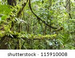 Epiphytes  Ferns And Moss ...
