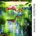 single pink flamingo standing... | Shutterstock . vector #115917436