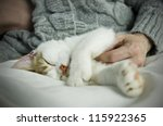 Stock photo pet owner on bed with sleeping cat close up 115922365