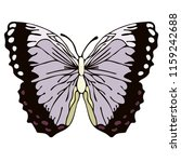 butterfly cartoon drawing ...   Shutterstock .eps vector #1159242688