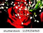 a red rose bud in drops of... | Shutterstock . vector #1159256965