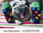 Stock photo funny image of real family life at home with best friends woman and pug sleeping toeghter colorful 1159270705