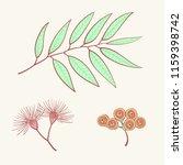 eucalyptus  blue agonis thyme... | Shutterstock .eps vector #1159398742